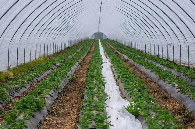ventajas fertirrigación para cultivos